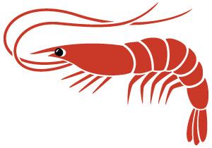 Maxmedix Antarctic Krill Oil