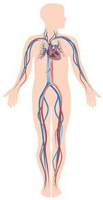 Check om der kan være fysiske årsager til din impotens