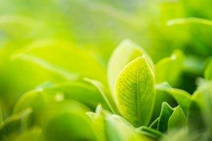 Naturlige Kostsupplementer Mod Inkontinens